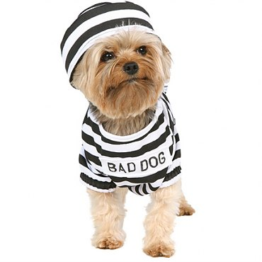 Jail Hound Dog Costume