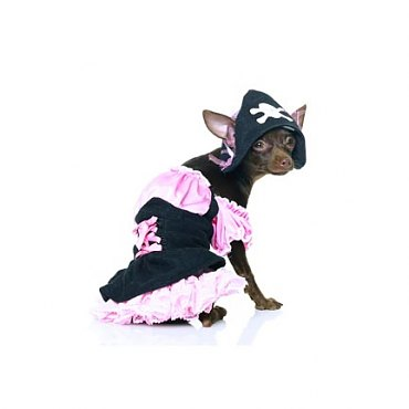 Pirate Dog Costume *