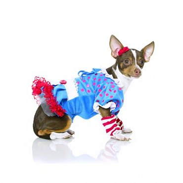 Ragdoll Dog Costume