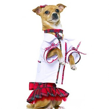 Teachers Pet School Girl Dog Costume
